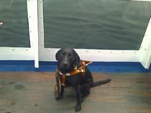 Joy sits on deck.